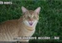 felinegrace