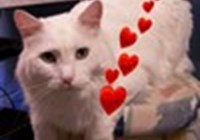 CatBurgh avatar