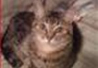 pjperry avatar