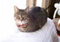 op_sMama avatar