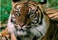 CelticTiger avatar