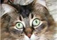 lionelcat avatar
