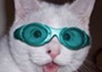 VivaCat avatar