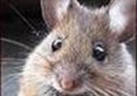 mousegirl1115