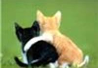 CatnipPacket