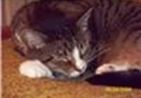 Fat_cat7