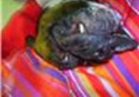 Brittangerine