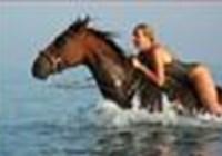 horsey13