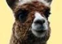 The_Alpaca