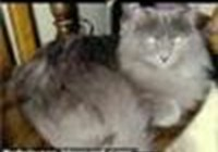 Kittylaughs