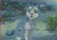 Kiadawolf14