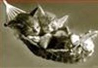 kittydance21
