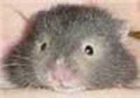 jlandis avatar