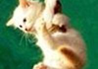 kittyfreek