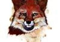 Cfisch avatar