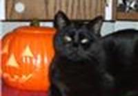 Carlisle avatar