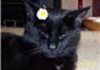 poppythecat