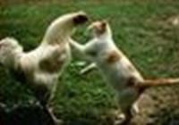 gatosquato