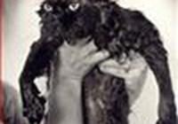 missjkitty avatar