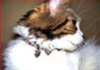 Catsoul
