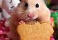 HamsterGirl95