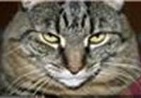 chech1965 avatar
