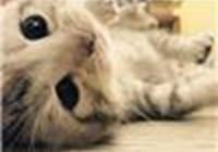 Kittyzlol