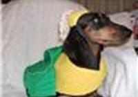 corndog1218