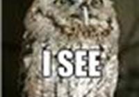 owls_rule
