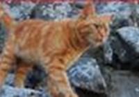 Cat45005