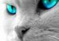 KittenWuv