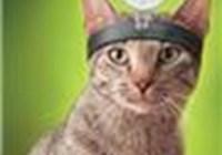 dr.kittendude