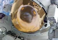 SpaceLemur