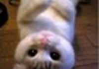 SASS-CAT