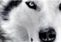 Fox11 avatar