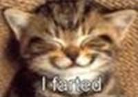 catcatcat4