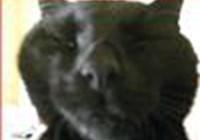 katt-hun