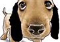 Quiz.Beagle