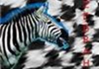 zebrah