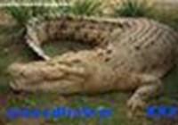 crocodiletearxoxo