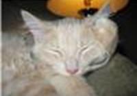 Cat_Kute