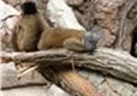 lemurfriend
