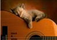Jazzcat013