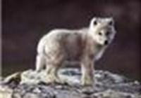 Fuzzehwolf