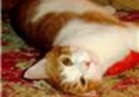 Poopsie.n.Cuddlez avatar