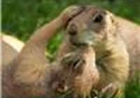 s9uirrel