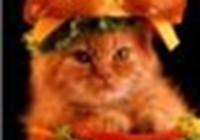 KittensForBreakfast