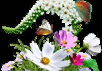 MirageBD avatar