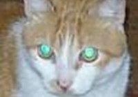 AuroraAustralis avatar