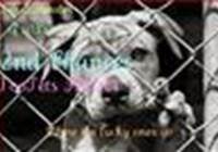 DogsFurever101